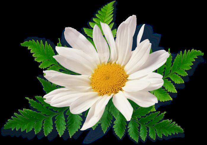 111505939 102899123 scrapangie lilies ele11